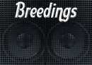 Blue Nose Pitbull Breedings by HardrockBullys Pitbull Breeder